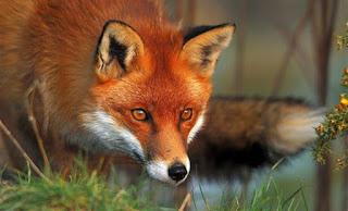Ανακοίνωση από το Τμήμα Κτηνιατρικής Πιερίας για την έναρξη του Προγράμματος Ενεργητικής Επιτήρησης της Λύσσας