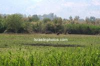 De Hula Vallei, Natuur, Foto's, Israel, Reizen
