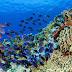 Diversidad de peces impacta de manera positiva la salud de los arrecifes