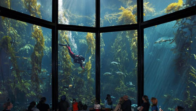 Preços do Monterey Bay Aquarium na Califórnia