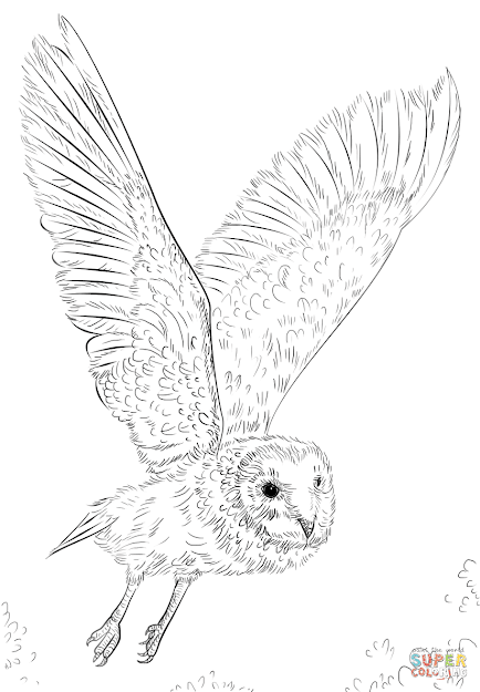 Click The Barn Owl In Flight Coloring Pages To View Printable