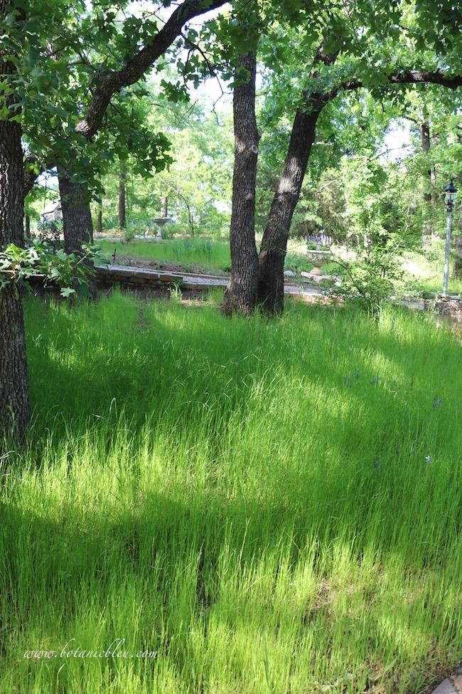 Spring green grass meadow under oak trees