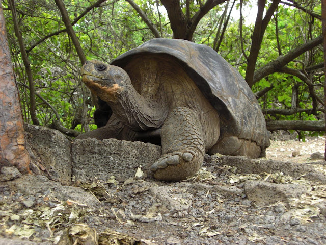Study pinpoints when the Galapagos Islands developed their unique ecology