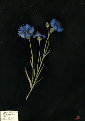 Cornflower paper collage