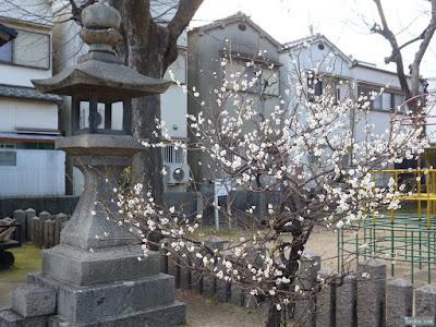 柴島神社の灯篭と梅