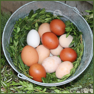 Fresh Eggs in bucket of boxwood