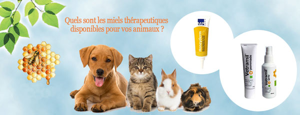 Le miel pour soigner les animaux