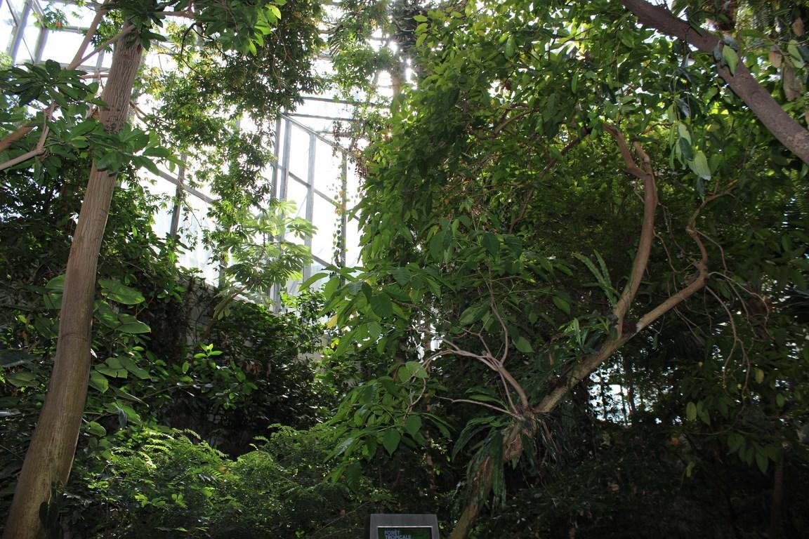 Montr al avec les enfants le biod me et le jardin for Biodome insectarium jardin botanique