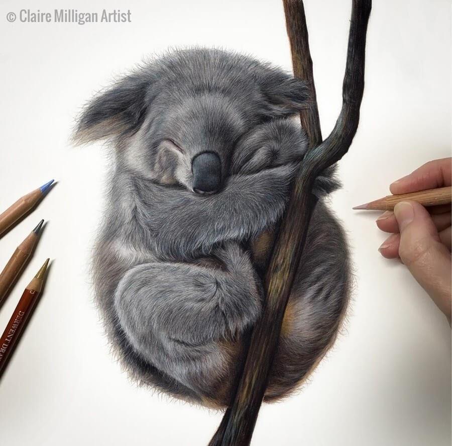 03-Koala-Claire-Milligan-www-designstack-co