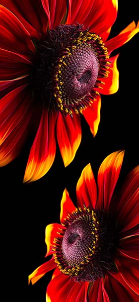 Red petaled flower iphone style wallpaper