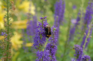 How herbaceous borders can play their part in bringing in pollinators