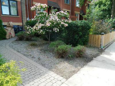 Leslieville front garden weeding cleanup after by Paul Jung Gardening Services Toronto