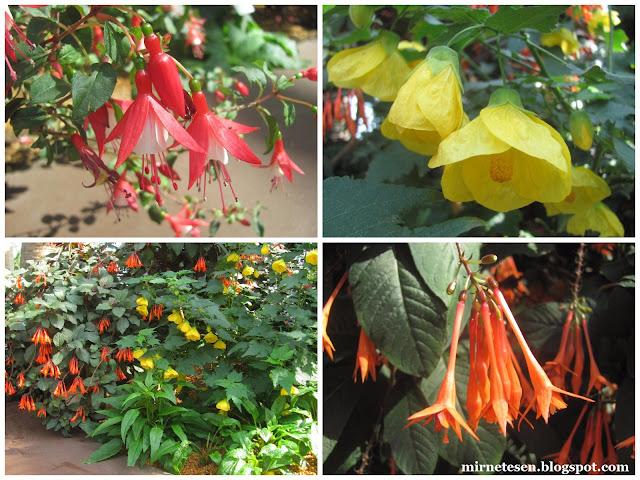 Цветочный Купол, Сингапур - Южноамериканский сад