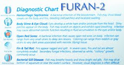Aquarium Pharmaceuticals Furan 2 Diagnostic Chart