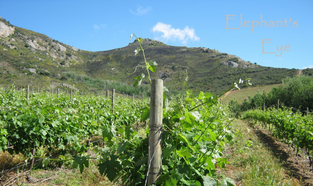 Vondeling vineyard with the biodiversity on the hill beyond