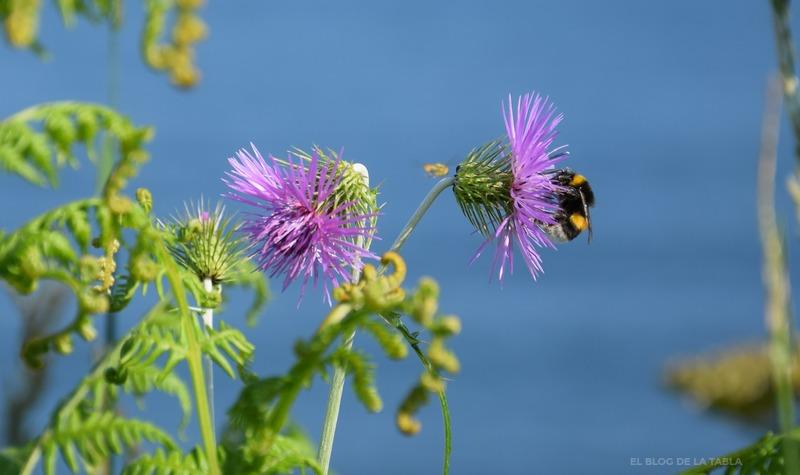 flores silvestres color purpura y abeja