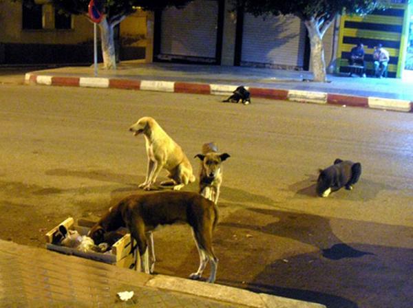 مطالب ببرمحة حملة للقضاء على الكلاب الضالة و المشردة بـ تلعصة