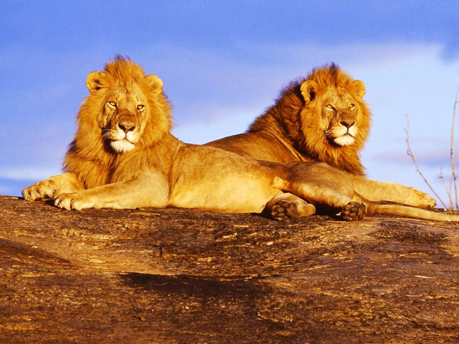 Singa Nama Gambar Binatang A Z