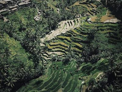Desa Ubud Menawarkan Liburan Yang Seru