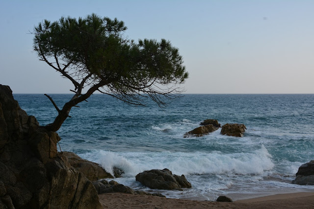 Platja D'aro tree sea