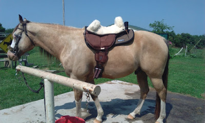Horse treeless saddle pad reviews - Barefoot Physio bareback pad