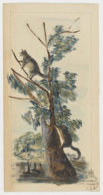 """Christmas Card design depicting a two opossums in a tree with the words """"Good Wishes""""."""