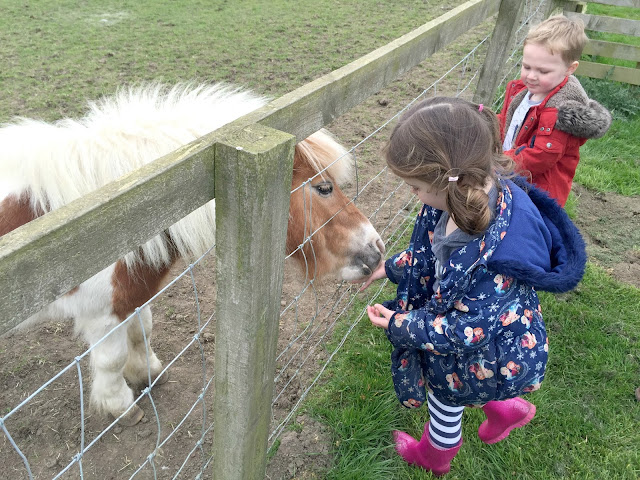 Feeding a Shetland Pony at Whitehouse Farm Morpeth