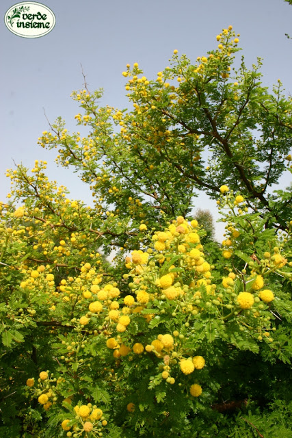 Arbusti Fiori Gialli Primavera ~ duylinh for