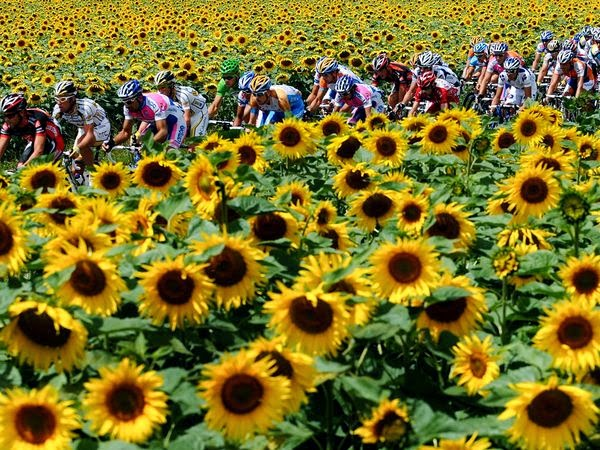 Rent a Villa for Tour de France