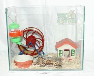 Kandang Hamster yang Baik