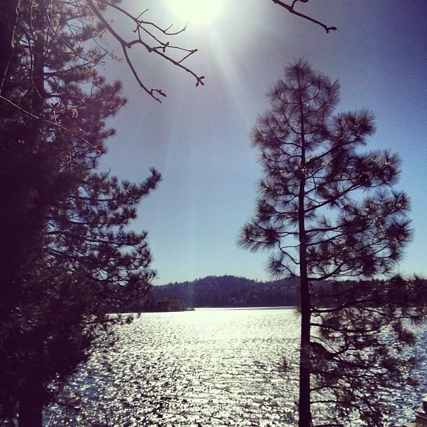 sun on the lake through the trees