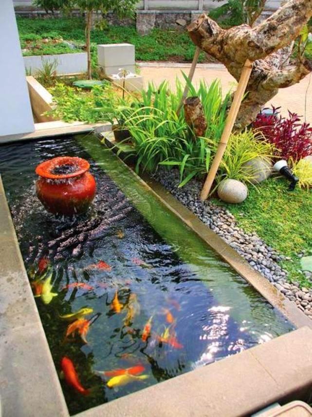 40 gambar kolam ikan minimalis kolam ikan koi kolam ikan