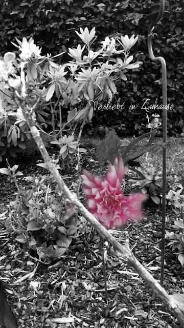 """Fotoprojekt 2in1 Bildbearbeitung mit Handy-App """"Snapseed"""" Photoblend bzw Doppelbelichtung"""