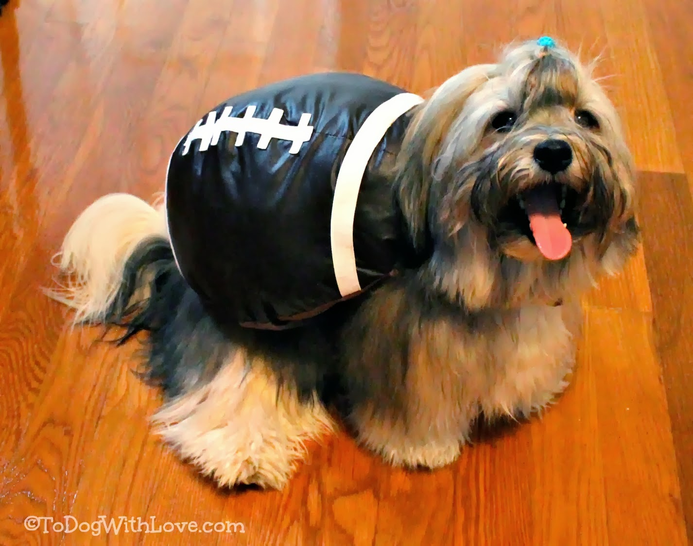 To Dog With Love: Help us Decide on a Halloween Costume ...