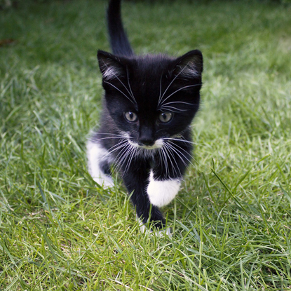 black and white cat running on grass