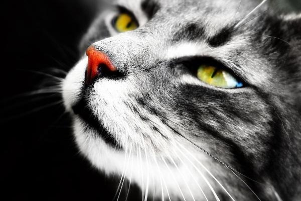 Seleksi warna fotografi