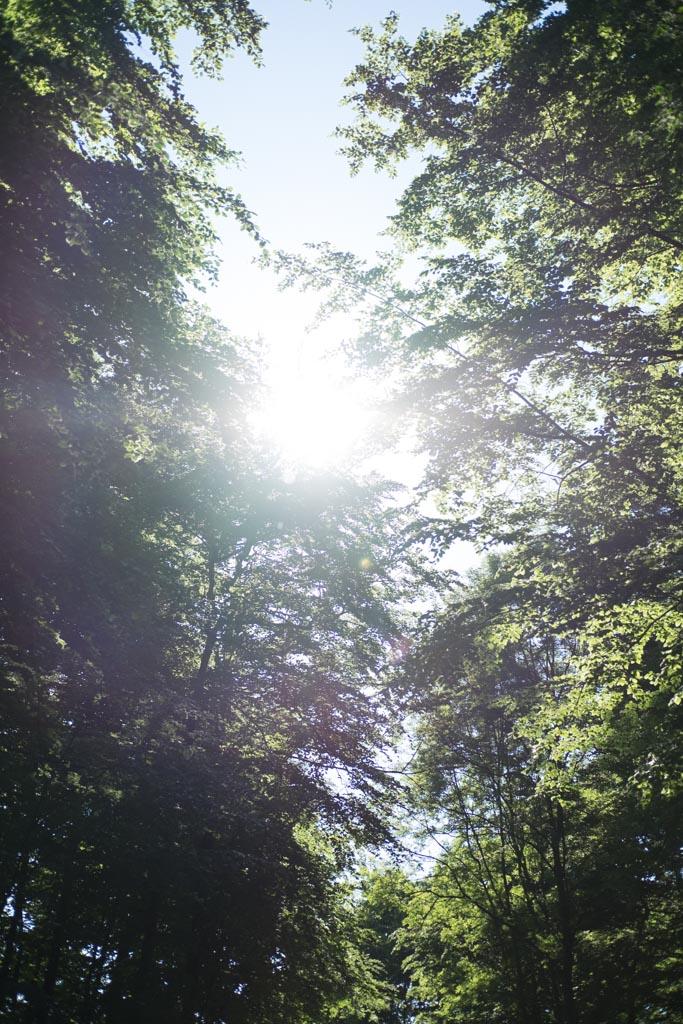 www.fim.works | Lifestyle-Blog | Gegenlicht zwischen Bäumen, Wald