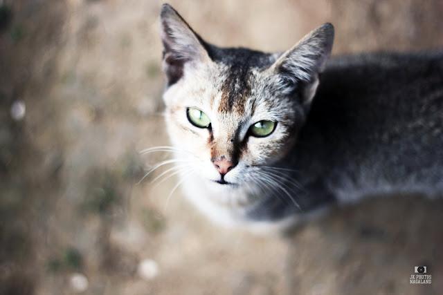 close up photo cat meow
