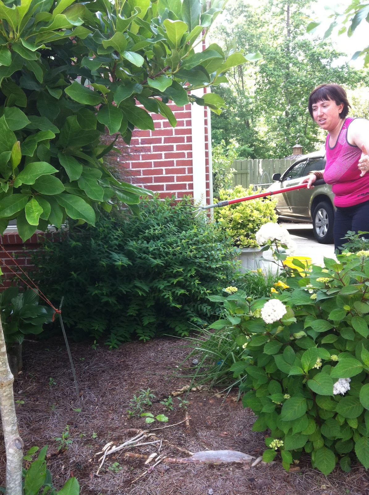 Bella Before and After: How to catch a snake in your garden.