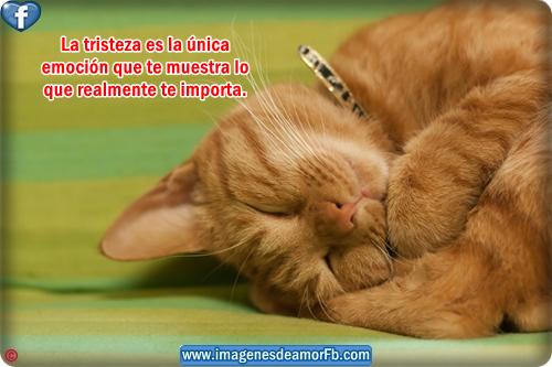 Imagenes Bonitas Con Frases Tristes