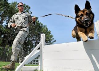 good boy dog training