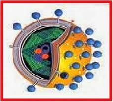 Bioteknologi dengan Fusi Se