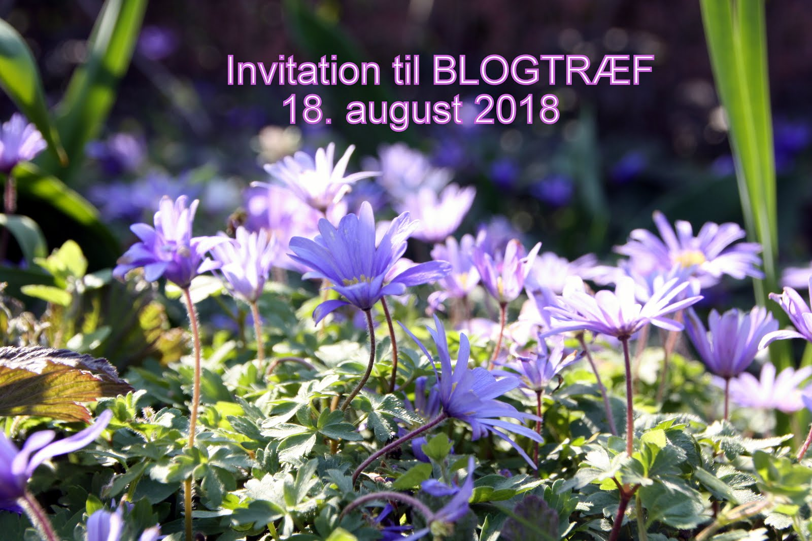 Invitation til blogtræf