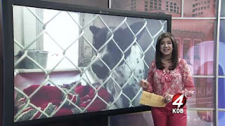 http://www.kob.com/albuquerque-news/shelter-dogs-to-become-service-animals/4216683/?cat=504