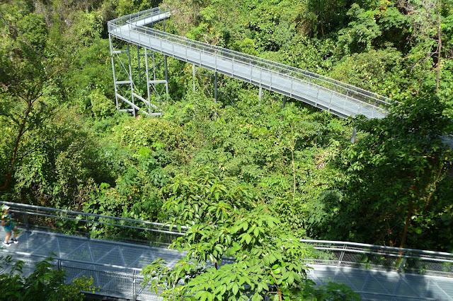 Dżungla w Singapurze