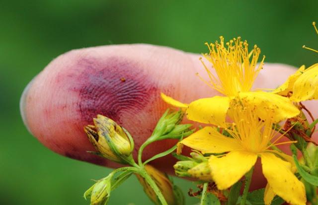 Se puede ver como el dedo queda manchado con una sustancia rojiza parecida a la sangre