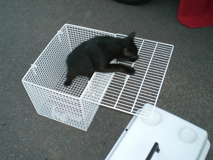 fangen katzen igel