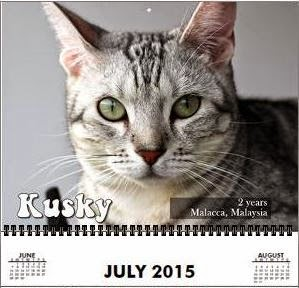 Kusky the July15 Model for Purrfect Youngsters - Lovecats Wall Calendar