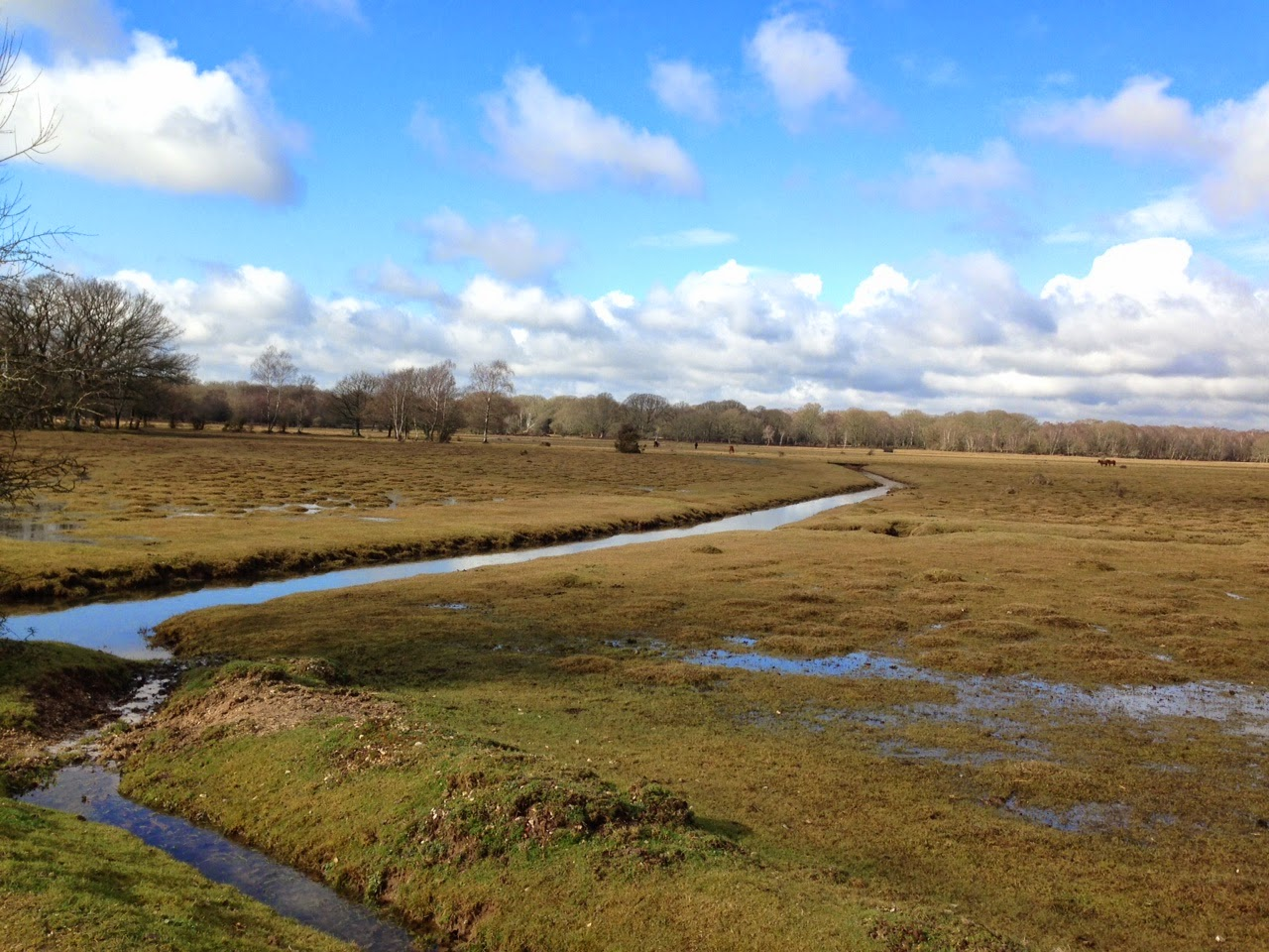 Common land at Brockenhurst in the New Forest