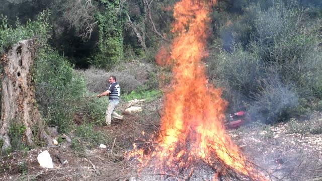 Απόφαση της Κομισιόν: Τέλος στο κάψιμο των κλαδιών της ελιάς